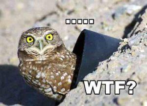 owl wtf