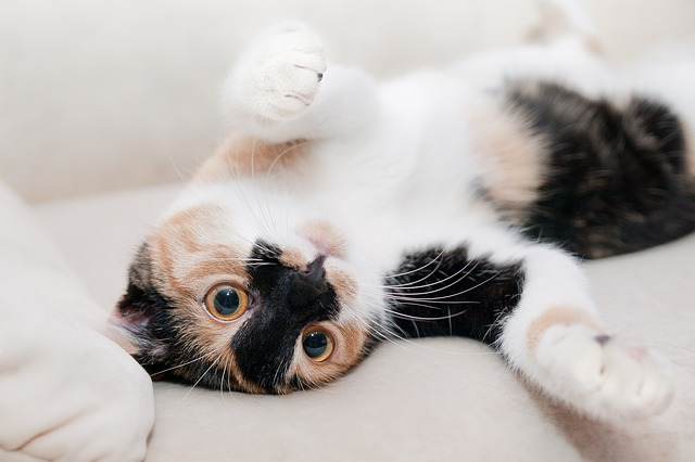 Searching Pixabay for a photo to represent relaxing and it showed me this cat laying on the lounge. And I say, fair enough.